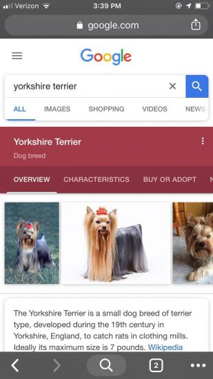 An example of screenshot of Google's knowledge panel for Yorkshire Terrier